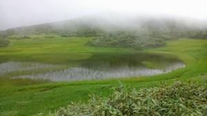 美しい湿原