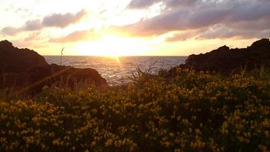 何かの花越しの日本海に沈む夕日